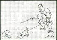 Японские аборигенные собаки