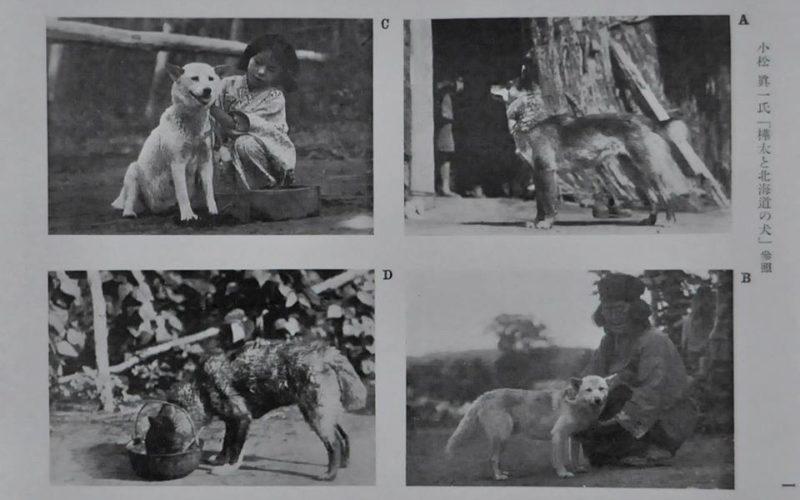 Tako - первая собака в NIPPO