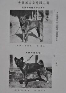 NIPPO - первые собаки