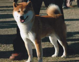 TAKECHIYO GO SANUKI MIZUMOTOSOU