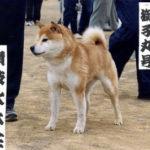 SHISHIMARU GO SANUKI MIZUMOTOSOU