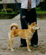 Собаки Shibaho (дзёмон сиба)